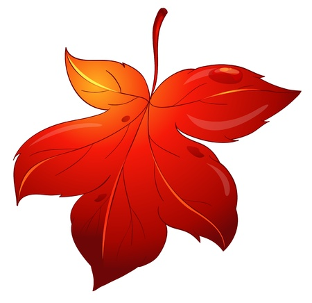 Illustration of a leaf on white Stock Vector - 13800480