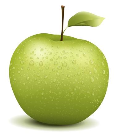 edible leaves: Illustration of a green wet apple Illustration