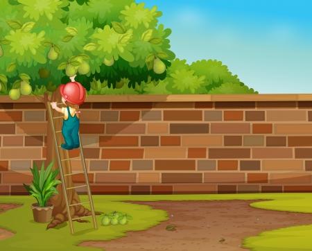 Illustratie van de jongen plukken vruchten