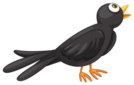 Illustration of a black bird on white Vector