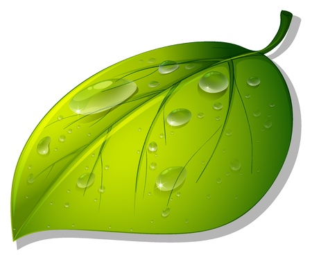 Illustration of a leaf on white Stock Vector - 13800582