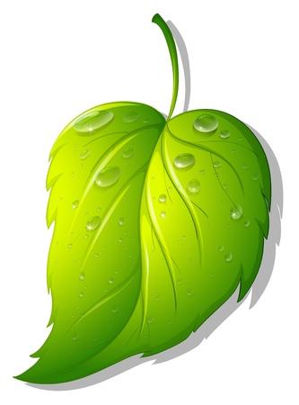 Illustration of a leaf on white