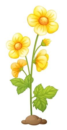 flor caricatura: Ilustración de la flor aislada en el suelo Vectores