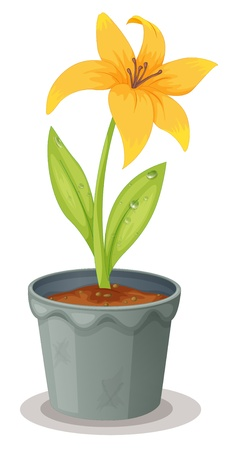 potting soil: Illustration of a daffodil on white Illustration