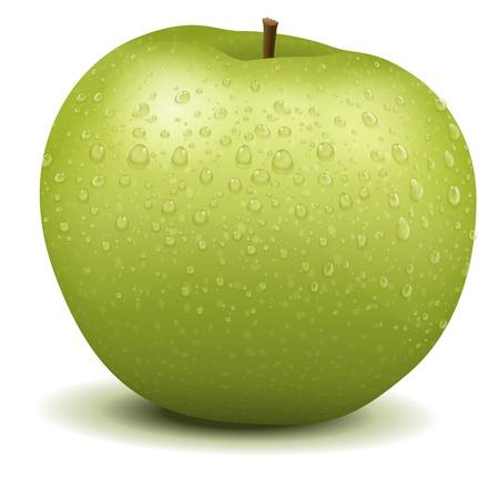 fruit stalk: Illustration of a realistic apple