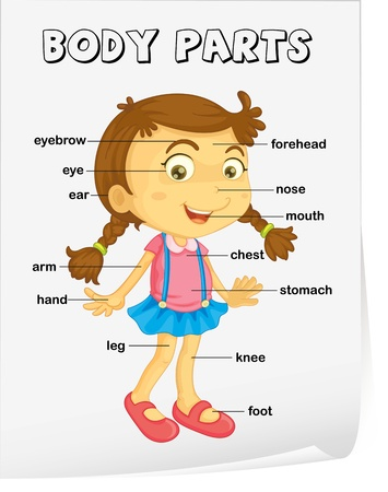 forehead: Vocabulary worksheet - parts of the body