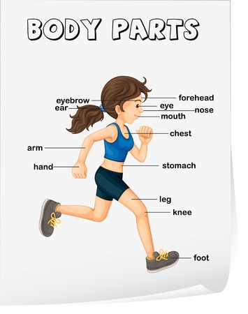 body parts: Illustration of girl running with parts labelled Illustration