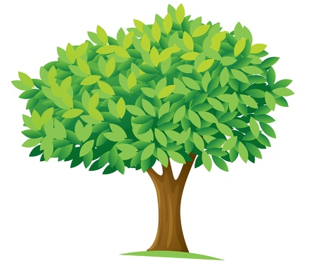 photosynthesis: illustration of a tree on a white background