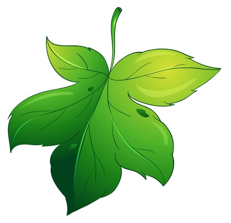 illustration of a green leaf on a white background Vector