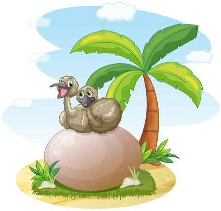avestruz: ilustración de la sesión de pelícanos en roca en blanco Vectores