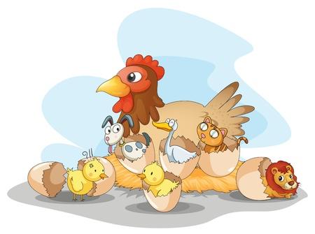 pollitos: Ilustración de gallina y otros animales