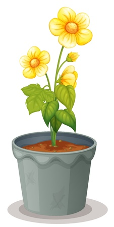 illustration of a flower pot on a white background Vector