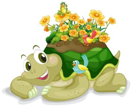 green turtle: illustrazione di tartaruga su uno sfondo bianco Vettoriali