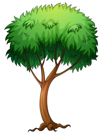 reproduction: illustration of a tree on a white background