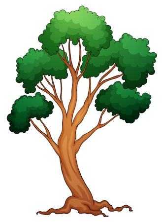 illustration of a tree on a white background Stock Vector - 14132376