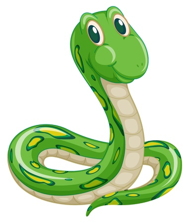 illustration of green snake on a white background Vector