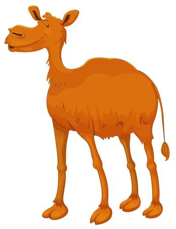 hump: illustrazione di un cammello su sfondo bianco