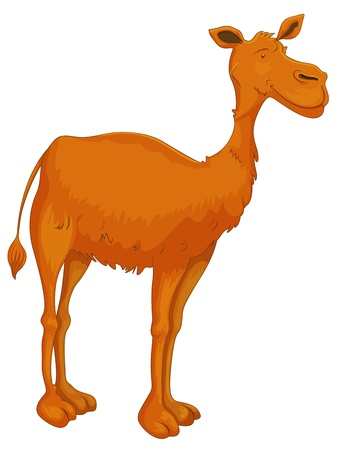 camel hump: illustration of a camel on white background