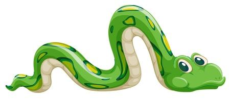 serpiente caricatura: ilustraci�n de la serpiente verde sobre un fondo blanco