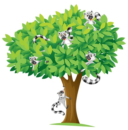 climbing up: illustration of squirrels on tree on white background