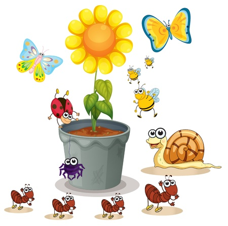 cartoon butterfly: illustration of plant pot and various insects on white