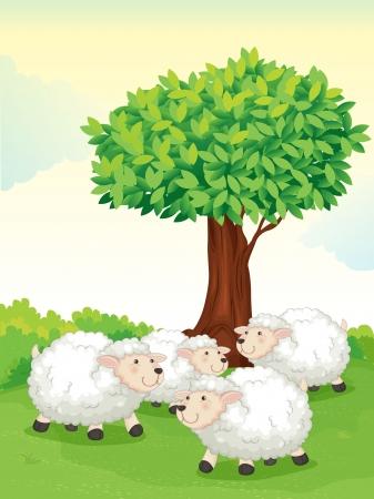 lamb cartoon: illustration of sheeps under tree in a nature Illustration