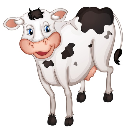 domestic cattle: illustration of a cow in a white background