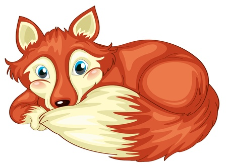 canid: illustration of fox on a white background Illustration
