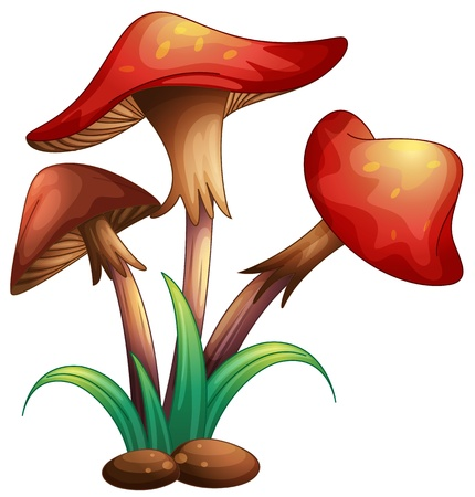 illustration of red mushrooms on a white background Vector