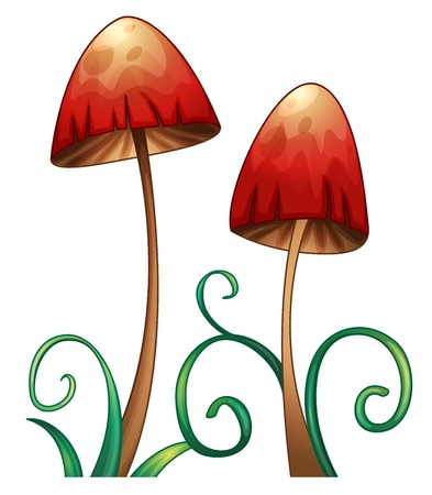 button mushroom: illustration of red mushrooms on a white background
