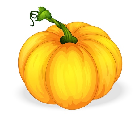 large pumpkin: illustration of yellow pumpkin on a white background