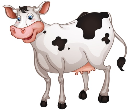 domestic cattle: illustration of cow in a white background