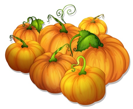 fruit stalk: illustration of a bunch of yellow pumpkins