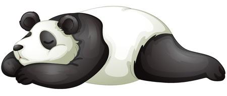 giant panda: illustration of a panda on a white background
