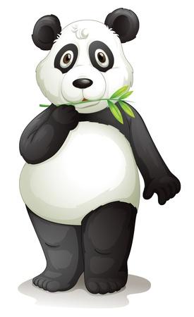 �  giant panda: ilustraci�n de un oso panda en un fondo blanco