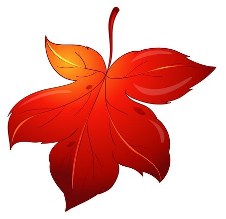 illustration of colorful leaf on a white background