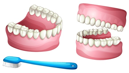 teeth white: illustration of denture and tooth brush on a white background