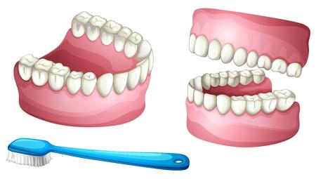 ilustracji z protezą i szczoteczki do zębów na białym tle