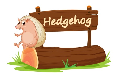 illustration of Hedgehog and name plate on a white Vector