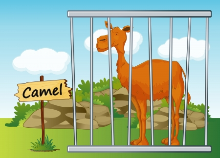 illustration of a camel in cage and wooden board Vector