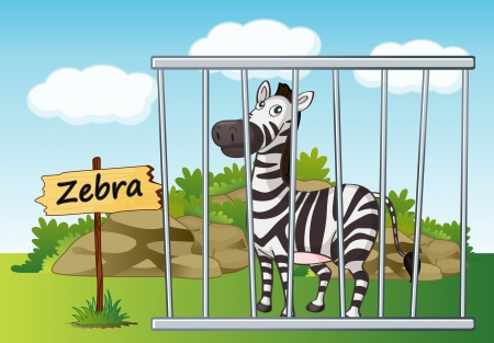 cruel zoo: illustration of a zebra in cage and wooden board Illustration