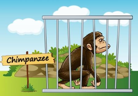 オープンエア: ケージ、木製の板でチンパンジーのイラスト  イラスト・ベクター素材