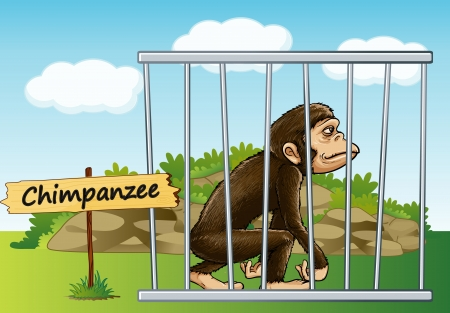 cruel zoo: illustration of a chimpanzee in cage and wooden board