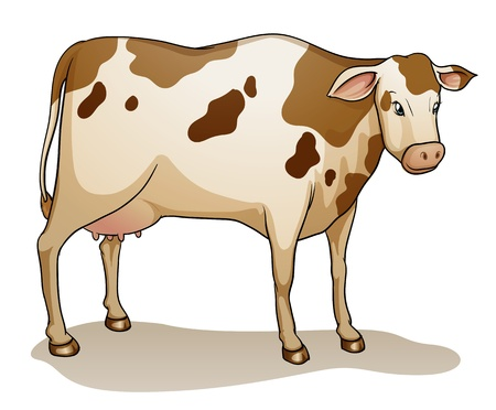 domestic cattle: illustration of a cow on a white background Illustration
