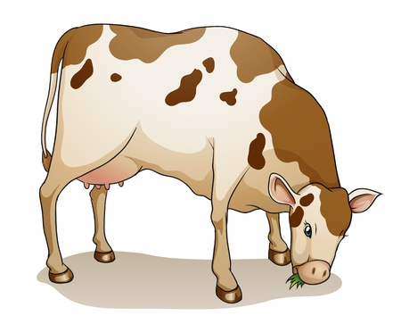 cows grazing: illustration of a cow on a white background Illustration