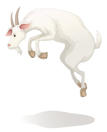 mountain goats: illustration of a goat on a white background