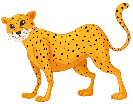 leopard: illustration of a cheetah on a white background