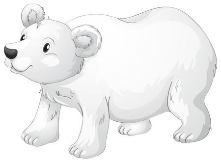 oso blanco: ilustración de oso polar sobre un fondo blanco Vectores