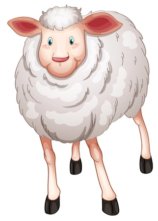 ruminant: illustration of a sheep on a white background