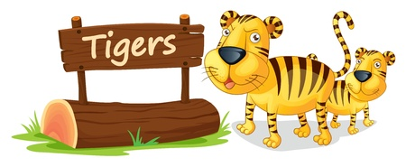 name plate: illustration of tiger and name plate on a white